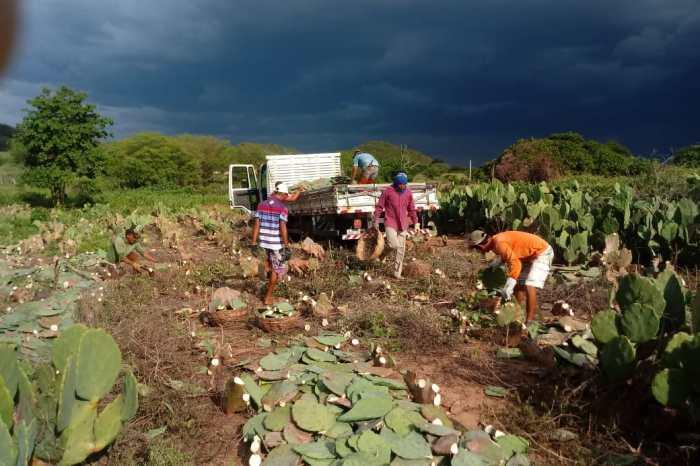 Distribuição de palmas continuam com associações de comunidades rurais em Monteiro
