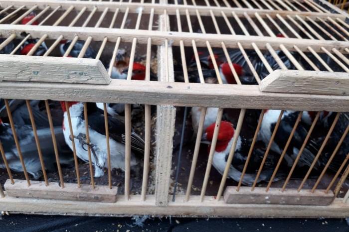 Quase 200 aves silvestres são apreendidas em Campina Grande