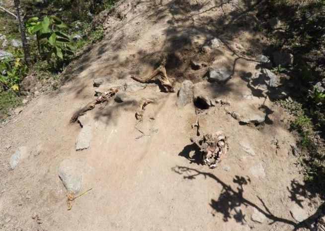 Ministério Público encontra 'cemitério de animais' na PB