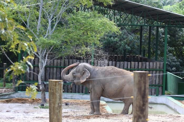 Pré-acordo é firmado para transferir elefanta Lady de João Pessoa