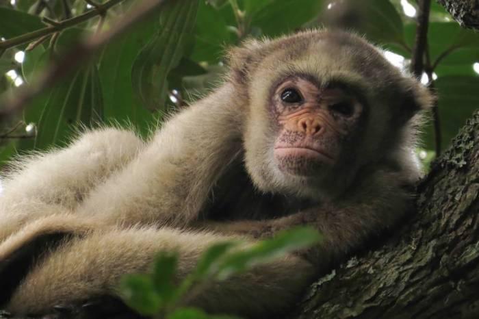 Sul e Sudeste voltam a ter mortes de macacos com febre amarela