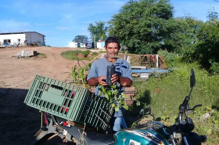 Prefeitura de Sumé e Ong AFINK estão distribuindo mudas de plantas frutíferas e ornamentais
