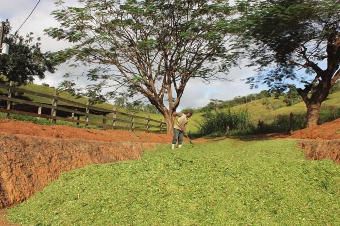 Monteiro investe em Silagem e produção chega a 350 Toneladas no primeiro semestre
