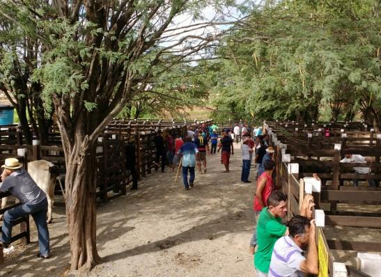 Comitê Gestor de Combate ao Covid-19 decide por reabertura da Feira de Animais de Monteiro