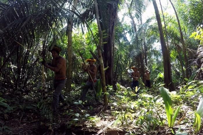 Pará lidera desmatamento na Amazônia nos últimos 12 meses