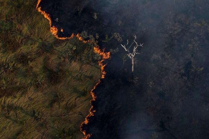 Oito países dizem que desmatamento dificulta comércio com Brasil