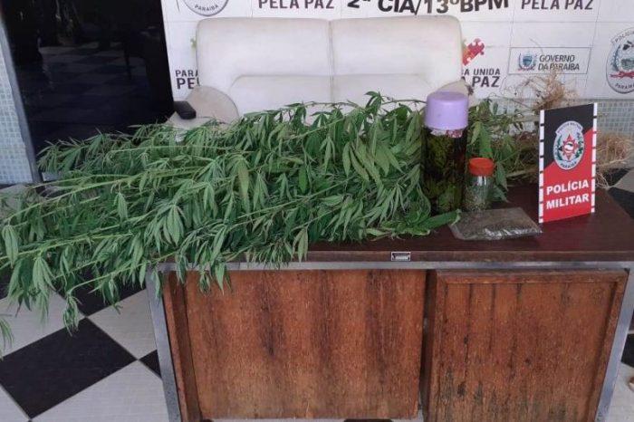 Polícia desarticula plantio de maconha no Sertão da Paraíba