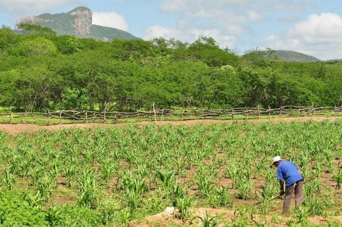 Governo libera pagamento do Garantia-Safra para agricultores familiares da Paraíba