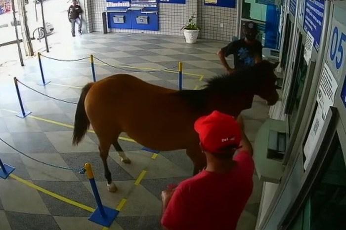 MOÍDOS DA REDAÇÃO: Cavalo invade lotérica, assusta clientes e vira piada em Cuité