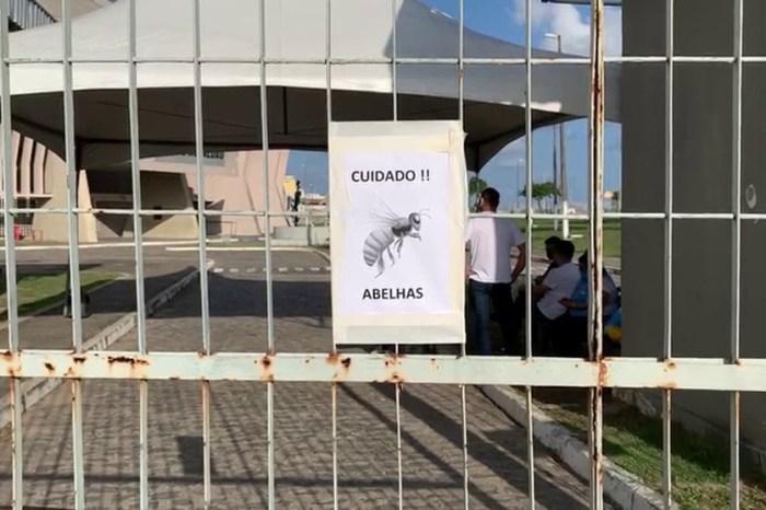 Vacinação é interrompida por causa de abelhas em ginásio de João Pessoa