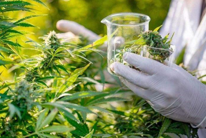 ALPB aprova incentivo a pesquisas científicas com a cannabis terapêutica