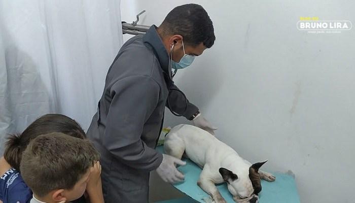 Animais são envenenados em cidade do Cariri