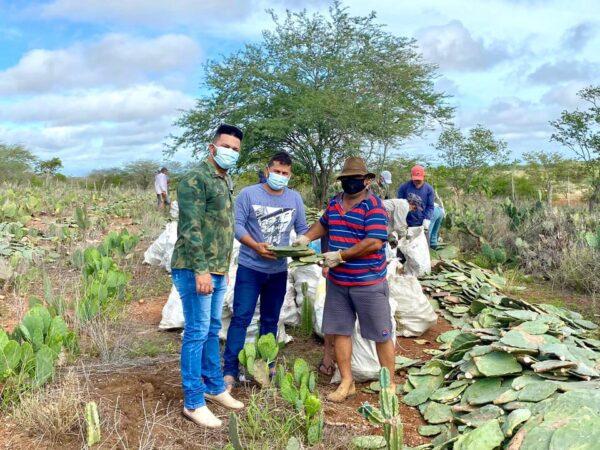 Agricultores de Santo André começam a receber palma forrageira adquirida pela Prefeitura Municipal