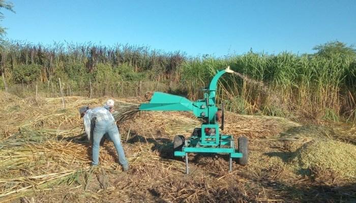 Prefeitura de Ouro Velho auxilia agricultores na confecção de silagem