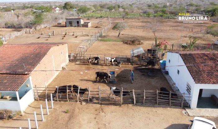 Prefeitura de Boa Vista investe em programa de inseminação artificial em bovinos