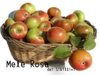 MELE ROSA dei Sibillini