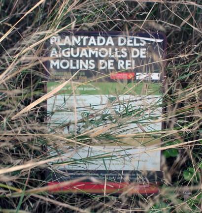 Cartell de l'última plantada d'arbre feta als aiguamolls ja tapat // Jose Polo