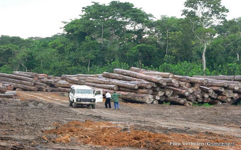 le trafic illicite du bois rouge au haut katanga irrite une mission parlementaire vivafrik. Black Bedroom Furniture Sets. Home Design Ideas