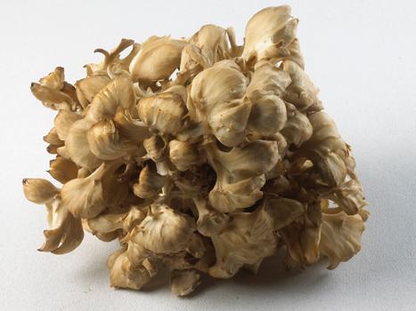 Maitake (Hen of the Woods) Mushroom