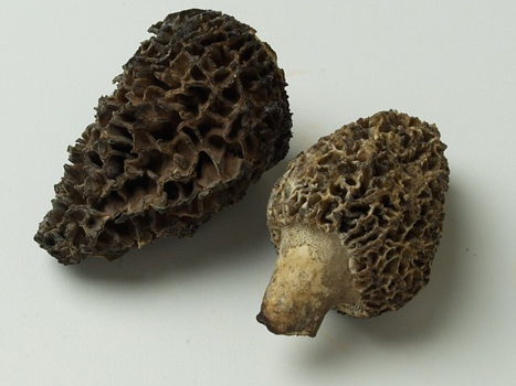 Morel Mushrooms Close