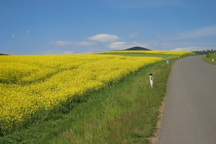Rapeseed Field, Burgenland, 2009