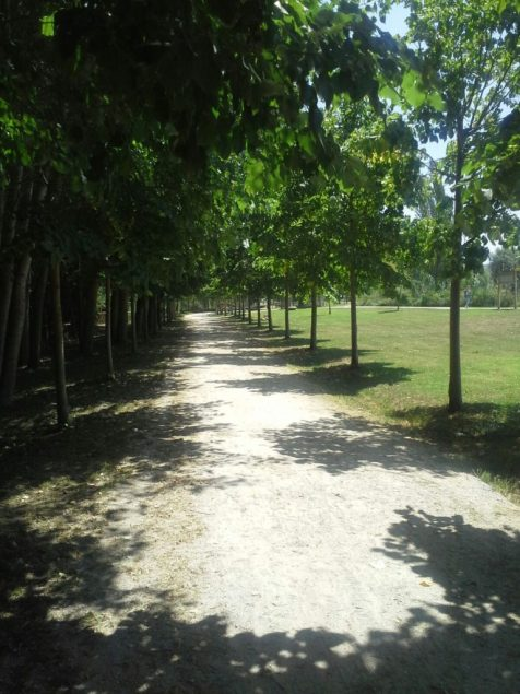 Caminho ladeado de árvores.