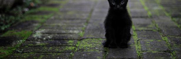 Aventuras de um gato chamado Sebastião