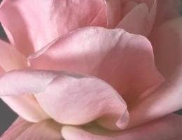 Mãos que mimam: Água Floral