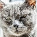 aggressività dei gatti