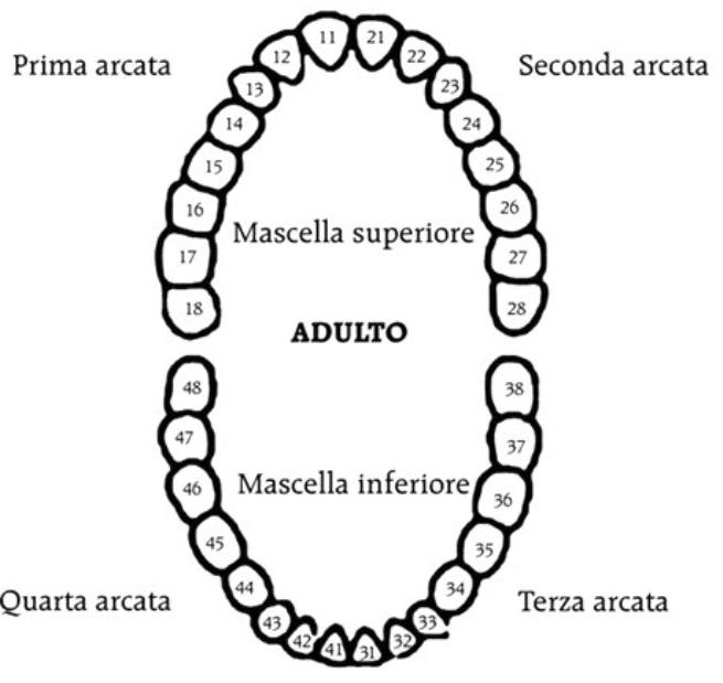 dentizione dizionario sintomi lettera D