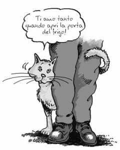 gatto-muove-la-coda