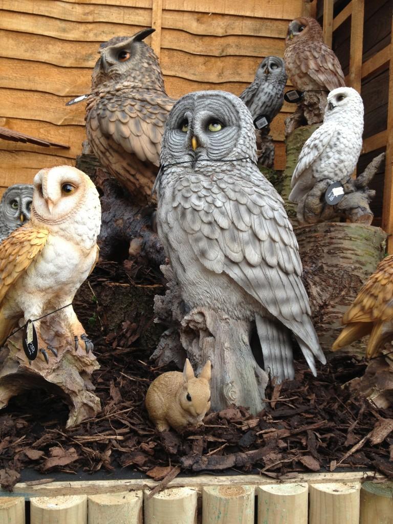 Owls And Birds Of Prey Vivid Arts