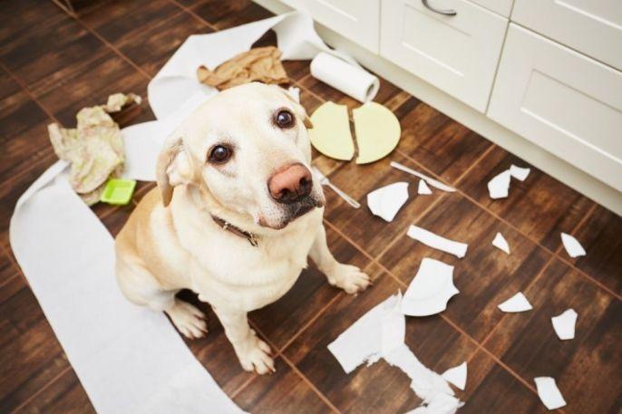 perro-ansiedad-por-cuarentena-27-de-abril-2020