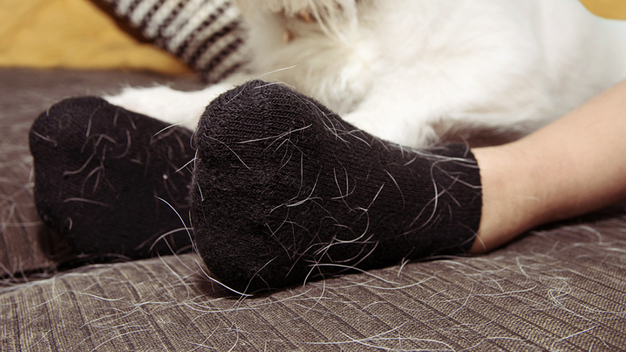 5-trucos-para-quitar-los-pelos-de-tu-mascota-de-la-ropa-y-otras-superficies 11/06/20
