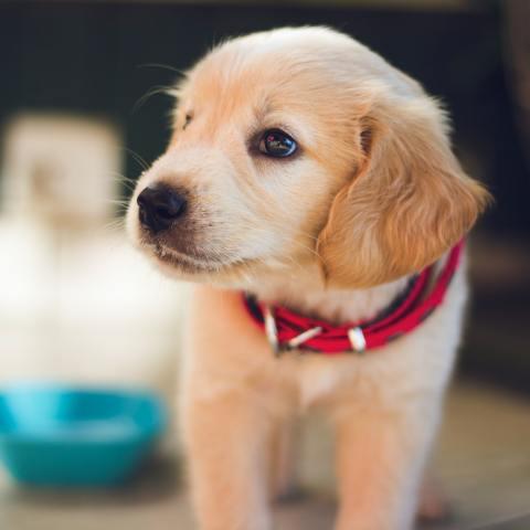 como-entrenar-perro-baño-29-de-junio-2020