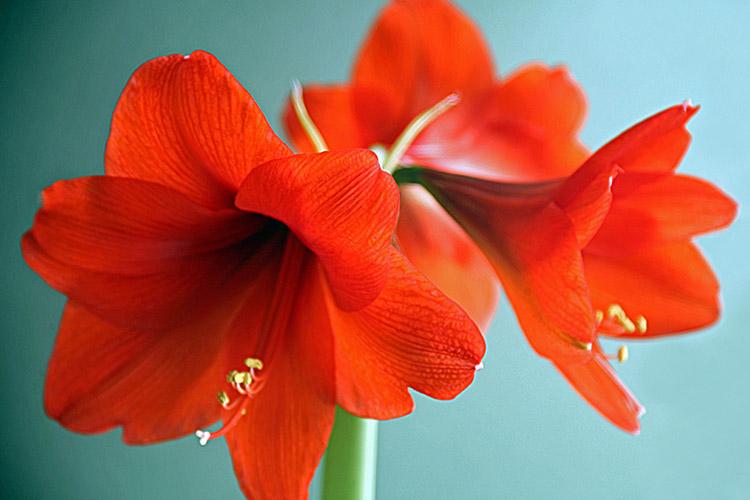 Plantitas-perfectas-para-cultivar-en-agua-que-además-lucirán-preciosas-en-tu-casa 17/07/20