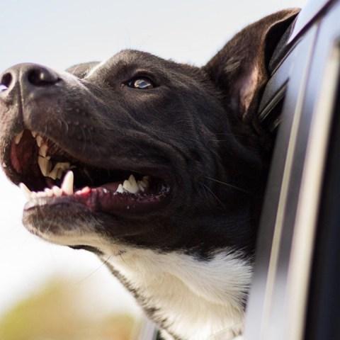 Hemos-vivido-en-el-engaño-1-año-de-perro-no-son-7-humanos-SON-MÁS 03/07/20