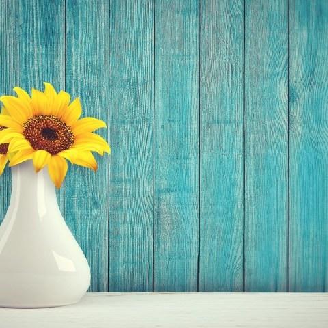 Tener-flores-en-casa-brinda-múltiples-beneficios-a-la-salud-según-estudio 28/07/20