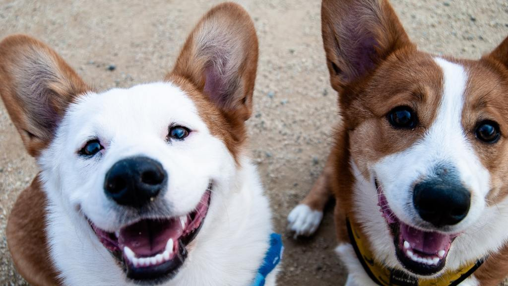 enfermedades-perros-10-de-julio-2020