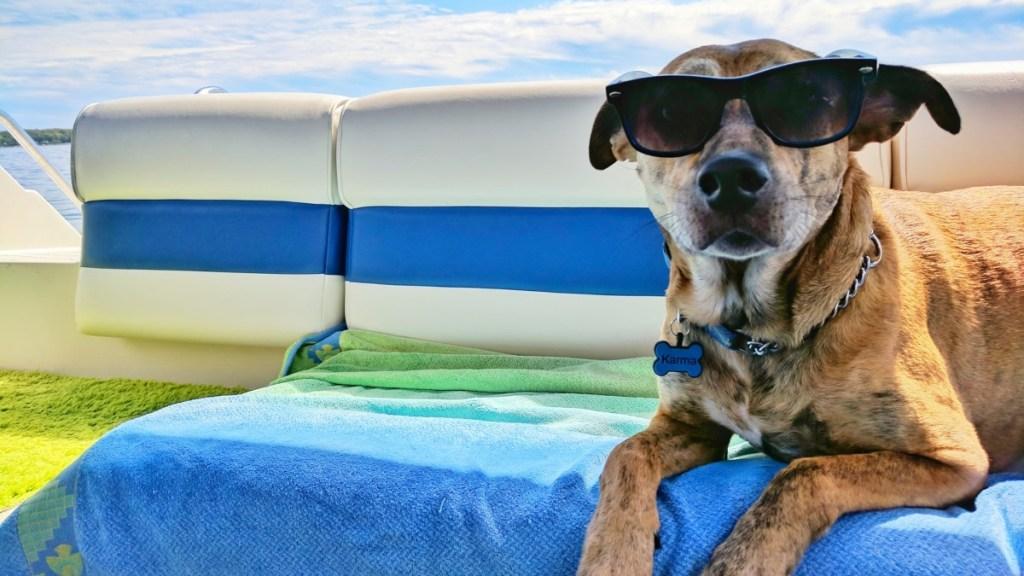 perro-inteligencia-artificial-mascotas-9-de-julio-2020