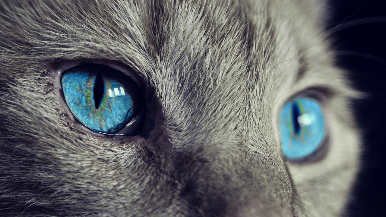 ¿Qué significa que mi gato me mire fijamente_ Podría estar viendo tu aura 13/08/20