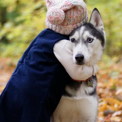 Estas son las 10 cosas que los perros más odian de sus dueños