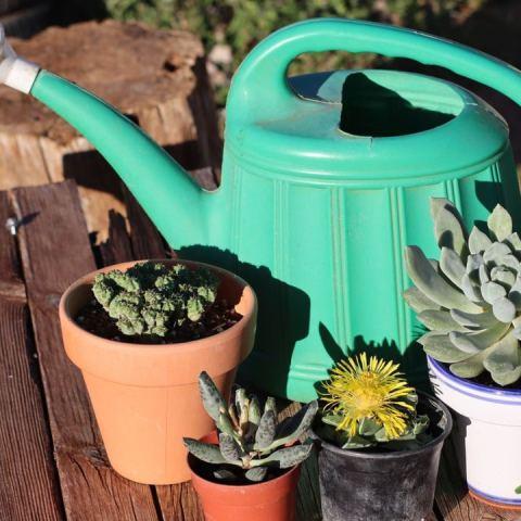 como cuidar plantas en invierno bajas temperaturas