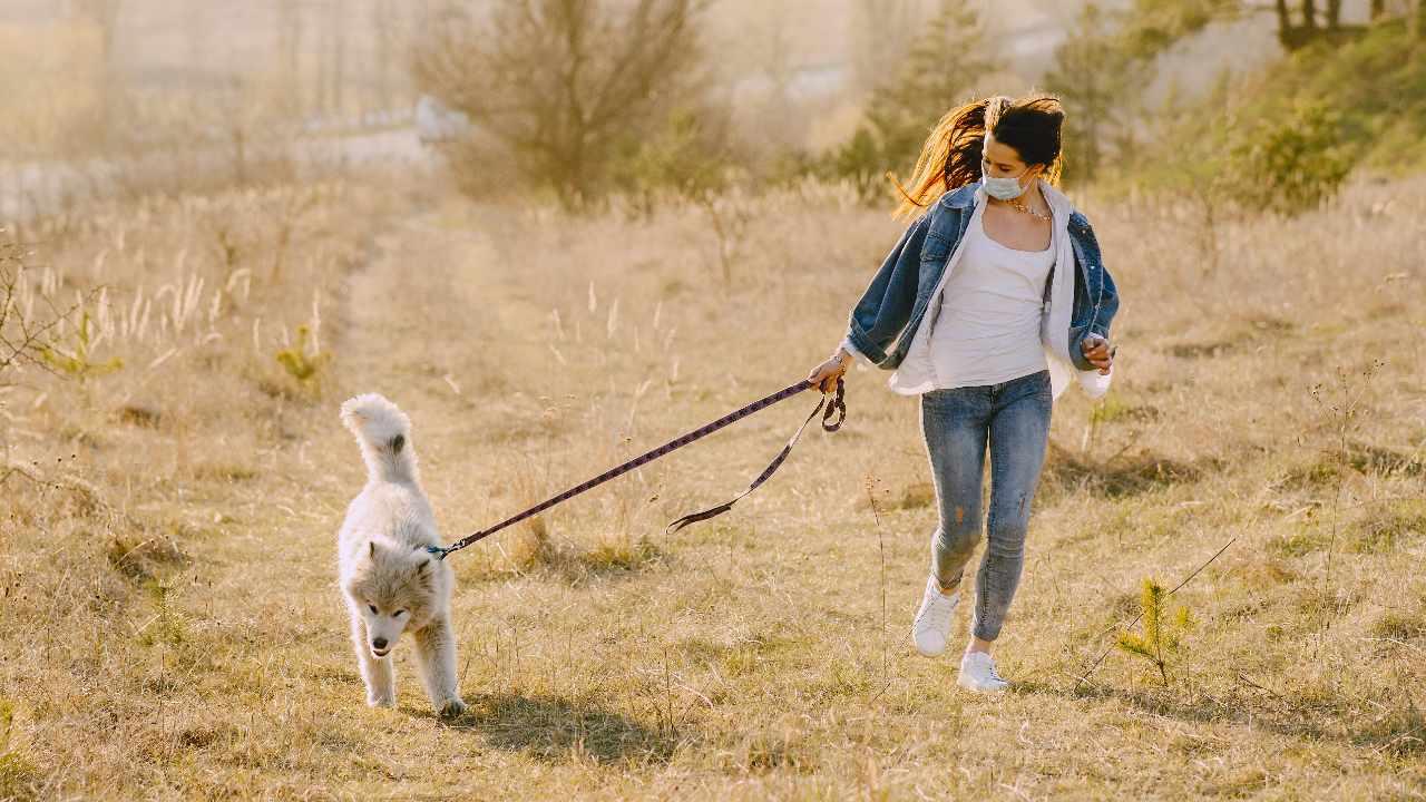 tirar correa perro