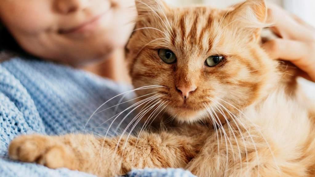 aplicación gato