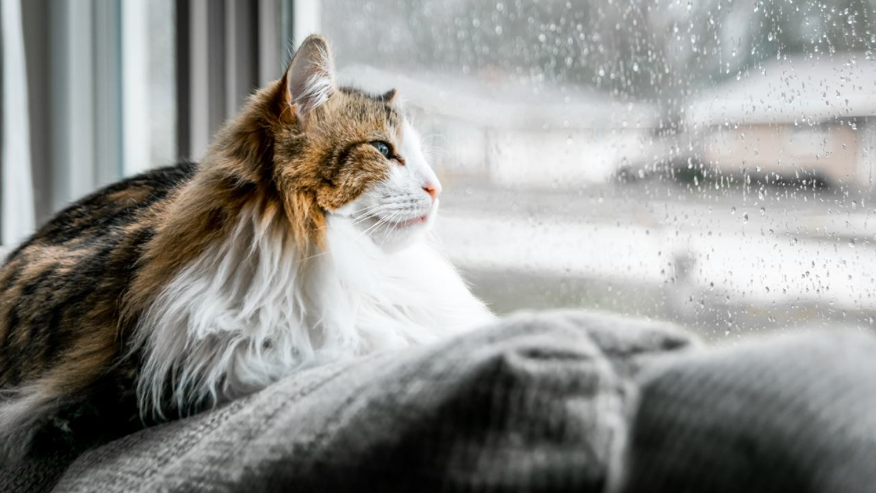 gato sin frío