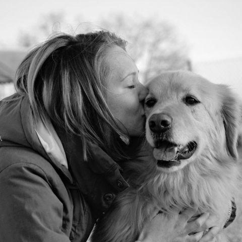 perros amor