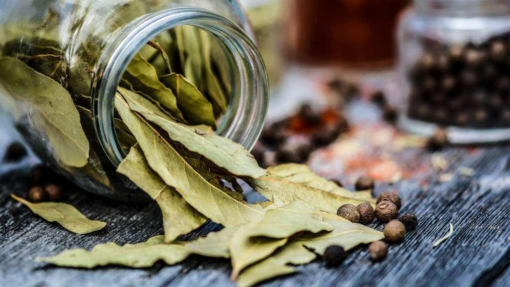hoja de laurel para hacer té