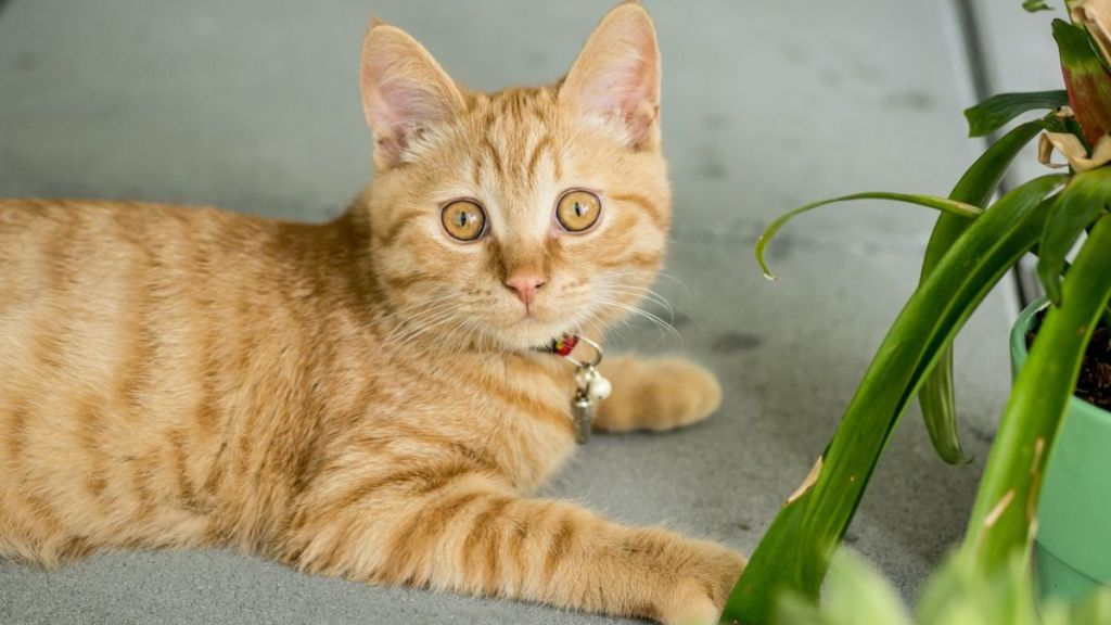 como evitar que tu gato se coma tus plantas