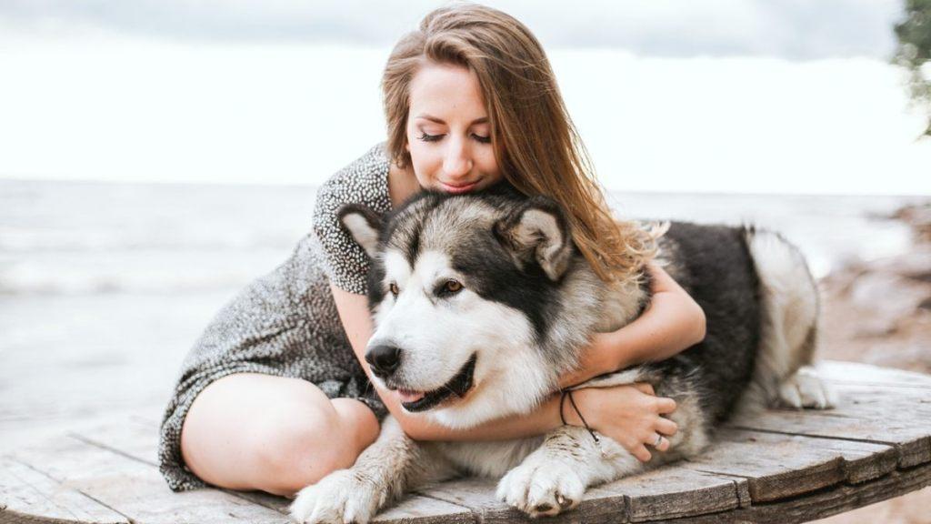 seguro para mascotas perros